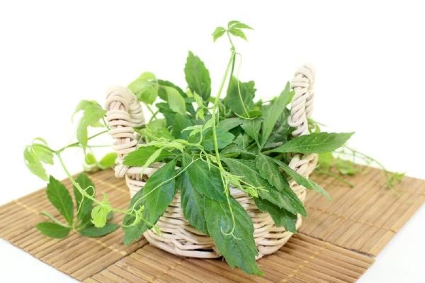 Rastlinu môžete pestovať aj doma v kvetináči, spĺňa aj dekoratívny účel