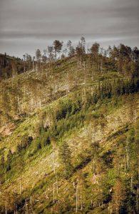Dnešný pohľad na vrch Zingoty. Foto: mapio.net
