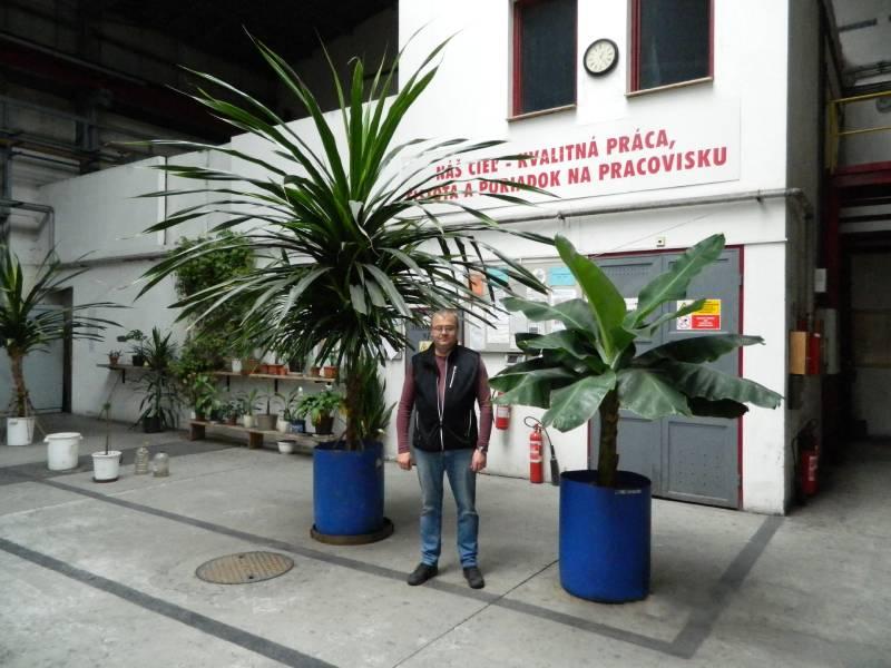 Vďaka záľube Pavla Komoru v kaliarni vládne pozitívna energia. Jeho pýchou je aj zmijovec, ktorý akurát zakvitol (foto dole). Foto: súkromný archív